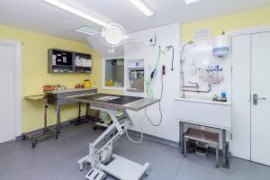 Ark Veterinary Hospital surgery