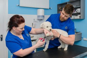 Dog grooming Killarney